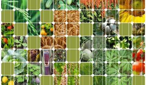 FAO 국제 연합 식량 농업 기구 정책 메시지